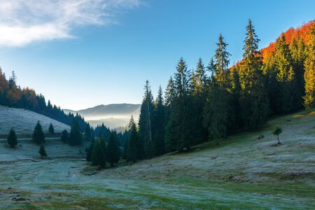 beautiful autumn scenery in mountains. coniferous trees on steep slopes of a hill. distant valley full of fog glowing in the morning light. amazing sunrise in apuseni natural park, romania