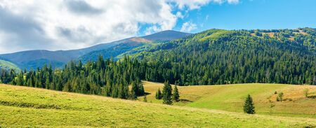wonderful autumn afternoon in mountains. spruce trees on the rolling hills. sunny weather with puffy cloudscape on the blue sky. carpathian countryside panorama of borzhava ridge Stock Photo