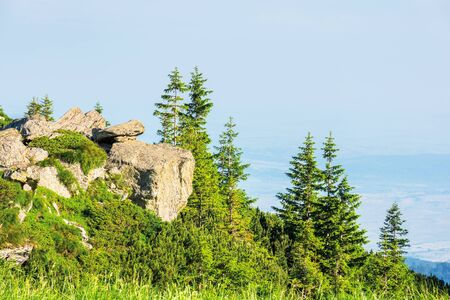 beautiful summer scenery of fagaras mountains. spruce trees on the huge boulders on the grassy steep slope. sunny weather with clouds on the blue sky