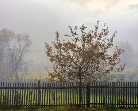 thick fog in autumn rural area. tree behind the fence. mysterious weather phenomenon at sunrise