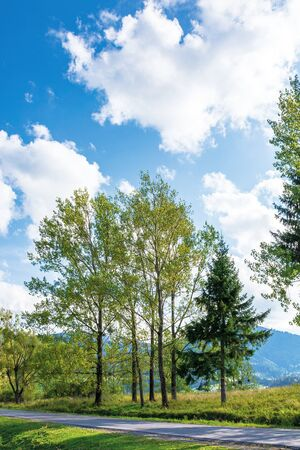 beautiful countryside in mountain. aspen trees along the road. wonderful september weather in afternoon Stock Photo