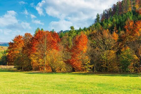 trees in red foliage on the green meadow. beautiful autumn landscape of mountainous countryside. sunny warm weather with clouds on the sky
