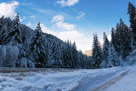 beautiful winter landscape in mountains. road through spruce forest in snow. wonderful frosty weather in the evening