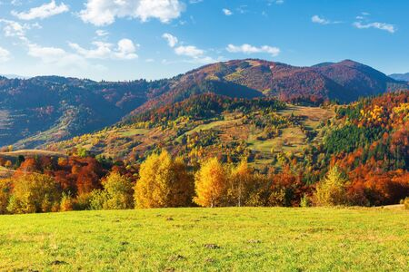 trees in colorful foliage. beautiful carpathians. wonderful autumn landscape of mountainous countryside. sunny warm weather with clouds on the sky Stock Photo