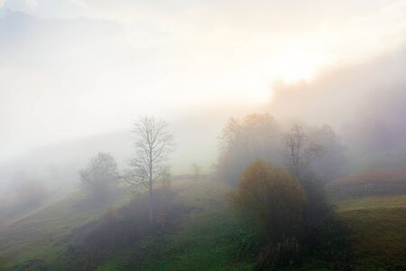 thick fog in autumn countryside. trees on hills in rural area. sunlight breaking through. mysterious weather phenomenon