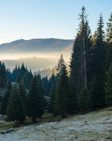 spruce forest on the hill in the morning. glowing fog in the distant valley. beautiful autumn nature scenery at sunrise Stock Photo