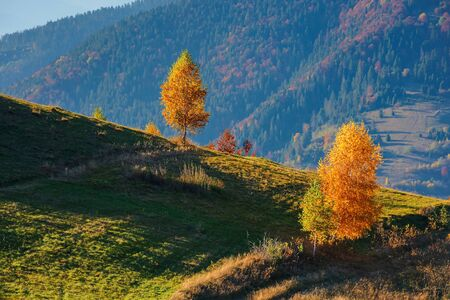 yellow trees on the hill. beautiful autumn landscape of mountainous countryside. sunny warm weather