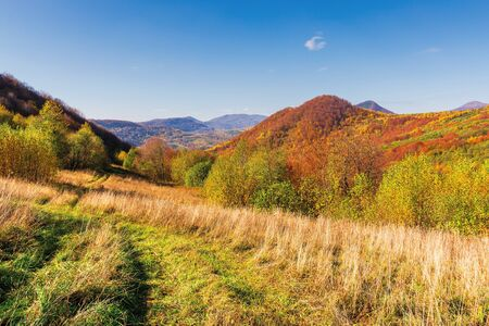 beautiful mountain landscape in autumn. forest on the grassy hills. wonderful sunny weather at high noon. amazing carpathian scenery of uzhanian national park, ukraine Stock Photo