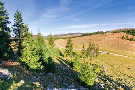 beautiful countryside with forest on the hills. autumn scenery with spruce trees in mountains in morning light. location apuseni natural park, romania. Varful Carligati in the distance