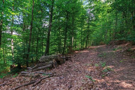path through primeval beech forest. beautiful summer scenery. abandoned old logs among the fallen foliage Stock Photo