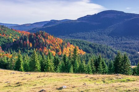 beautiful autumn mountain landscape. forested hill behind the grassy meadow. mixed forest in fall colors in the morning light. wonderful scenery of Apusenni natural park