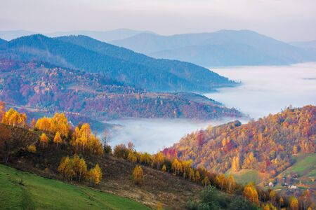 autumn countryside at foggy dawn. beautiful mountain landscape in autumn. trees in fall foliage, distant valley full of morning fog.  amazing view of carpathian rural area