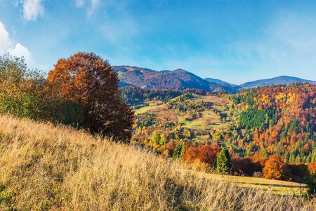 mountain countryside in evening light.  beautiful autumn scenery. trees in fall foliage. dry sunny weather. weathered grass on the meadow. ridge beneath a blue sky in the distance Stock Photo