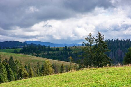 spruce forests on rolling hills. september weather with cloudy sky. mountain ridge in the distance. grassy meadow Stock Photo