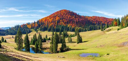 apuseni natural park in autumn. amazing morning panorama of varasoaia meadow, bihor, romania. forest on the mountain in fall color. spruce trees around small pond. sunny weather with high clouds.