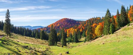 apuseni natural park in autumn. amazing morning panorama of varasoaia meadow, bihor, romania. forest on the mountain in fall color. spruce trees in the valley. sunny weather with high clouds. Stock Photo