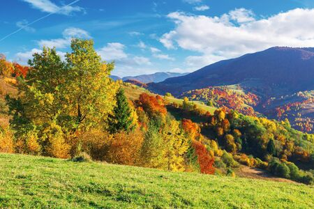 wonderful autumn scenery in mountains. trees in fall colorful foliage on the grassy meadow and hills. clouds on the blue sky above the distant ridge. wonderful october afternoon weather. Stock Photo