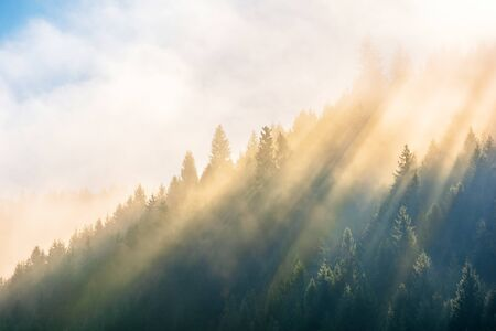 sun light through fog and clouds above the forest. spruce trees on the hill viewed from below. magical nature scenery in autumn. beautiful morning dreams concept