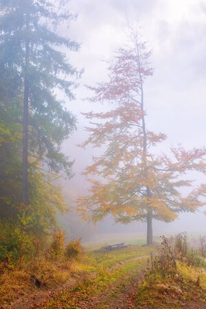 beautiful forest scenery in foggy weather. foliage on trees in amazing fall colors. bench near the path down the hill. uncertainty mood concept