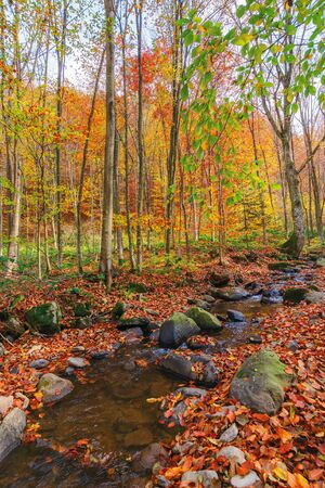 small water stream in forest. beautiful autumn nature scenery. ground covered with fallen red foliage among mossy rocks. melancholic vibes concept