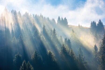 sun light through fog and clouds above the forest. spruce trees on the hill viewed from below. fantastic nature scenery. morning motivation concept Stock Photo