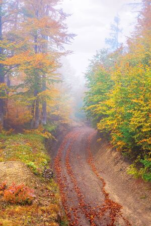 beautiful forest scenery in foggy weather. foliage on trees in amazing fall colors. country road uphill. uncertainty mood concept