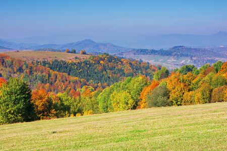 beautiful autumn mountain landscape. scenic view of a forest in fall foliage. grassy meadows and open vistas. wonderful countryside scenery on a sunny day