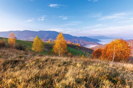 beautiful autumn rural landscape at sunrise. trees in fall colors on a grassy meadow in morning light. valley full of fog at the foot of distant ridge. sunny weather in mountains