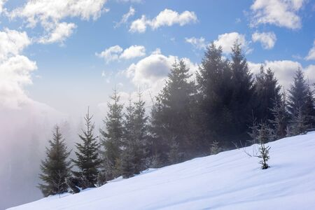 spruce forest in the morning. gorgeous winter scenery in foggy weather. trees on a snow covered hillside meadow. fluffy clouds on the blue sky. mysteriously glowing atmosphere Stock Photo