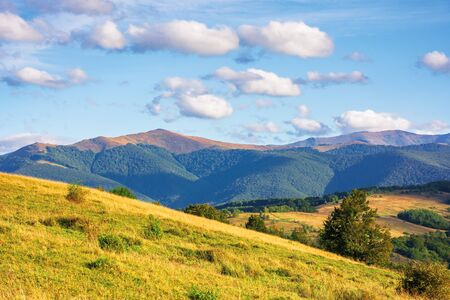 great view of carpathian mountain landscape.  wonderful evening scenery with fluffy clouds on the sky. temantyk an stij peaks of Borzhava ridge in the distance. located in transcarpathia, ukraine Stock Photo - 129131781