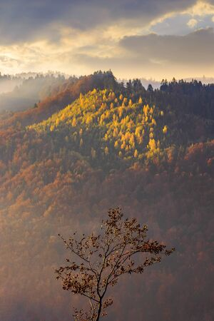 autumnal mountain scenery at foggy sunrise. lonely tree in the foreground. cloudy weather, forests in fall foliage Stock Photo