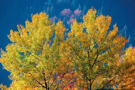 tree in colorful foliage in mountains. beautiful autumn scenery in the morning Stock Photo