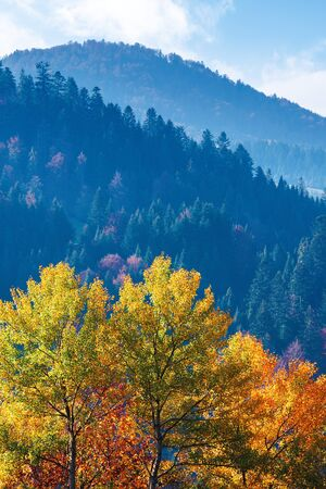 tree in colorful foliage in mountains. beautiful autumn scenery in the morning. clouds on the sky above the distant ridge