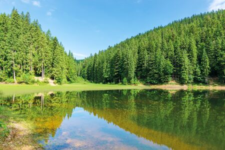 beautiful summer landscape in mountains. lake among the spruce forest. wonderful sunny weather. scenery reflecting in the water. great view of green and blue nature