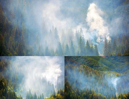 smoke in the woods. disaster on a dry autumn weather. collage of images