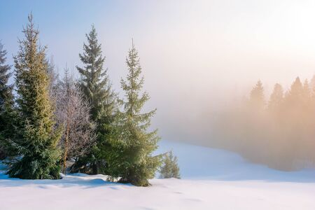 winter fairy tail in the morning. beautiful view at foggy sunrise. spruce trees on the snow covered meadow. coniferous forest in the misty distance. great sunny scenery Stock Photo