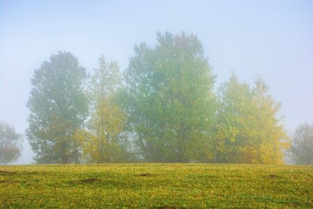 beech trees on the grassy meadow on a foggy morning. wonderful early autumn scenery. beautiful nature background