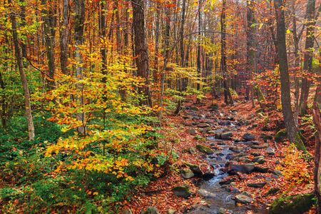 water stream among the rocks in the forest. great autumnal scenery. colorful foliage on the trees. hazy weather on a sunny day