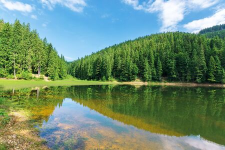 beautiful summer landscape in mountains. lake among the spruce forest. wonderful sunny weather with some clouds on the sky. scenery reflecting in the water. great view of green and blue nature