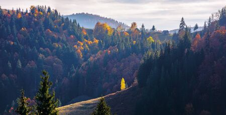great panoramic view of romania mountain landscape. forested slopes in evening light. deciduous trees in fall foliage. warm autumn afternoon scenery. village on top of a hill in the distance