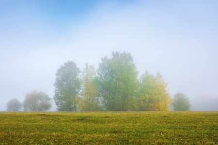 tall trees on the grassy meadow on a foggy morning. wonderful early autumn scenery. great nature view