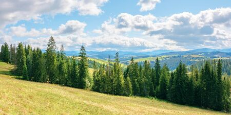 coniferous forest on the grassy hill. great panoramic view in to the distant gorgany ridge. wonderful sunny weather in early autumn. location mizhhirya region of transcarpathia ukraine