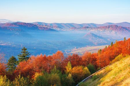 beautiful morning scenery in mountains. light passes through rising fog in the distant valley. wonderful autumn weather. trees on the near slope in colorful foliage. Stock Photo