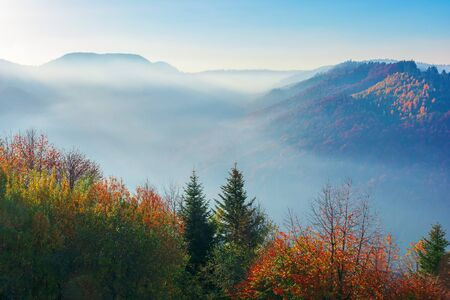 beautiful misty autumn morning in mountains.  forested hills in colorful foliage. fog rising above the valley. sunny weather with clear azure sky. magical moments of carpathian countryside