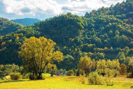 wonderful rural landscape in mountains. sunny autumn weather with clouds on the sky. trees in yellow foliage in the grassy meadow. village at the foot of the forested hill. beautiful carpathian countryside Stock Photo