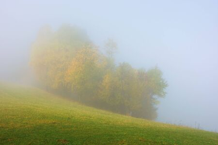 trees in colorful foliage on the meadow in fog. beautiful autumn scenery in the morning. wonderful nature background in misty weather