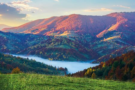 magical sunrise in mountains. valley full of fog. beautiful autumn scenery. trees in colorful foliage. idyllic atmosphere of carpathian countryside