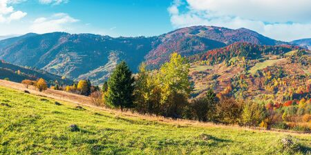 wonderful sunny autumn day in mountains. panoramic views of carpathian rural landscape. trees in colorful foliage and grassy meadow on the hillside. ridge in the distance beneath a sky with clouds