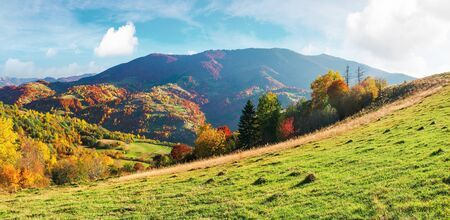 wonderful sunny autumn day in mountains. panoramic views of carpathian rural landscape. trees in colorful foliage and grassy meadow on the hillside. ridge in the distance beneath a sky with clouds Stock Photo - 130705807