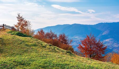 trees in red foliage in mountains at sunrise. wonderful rural landscape. wonderful sunny weather with clouds on a blue sky